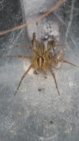 mb-spider